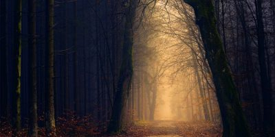 fota i dimma